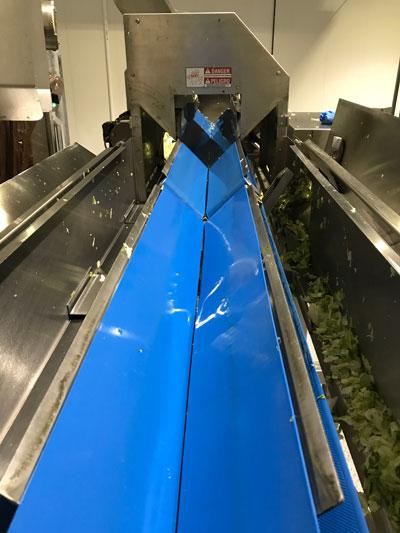 Slicer Belt for Fruits and Vegetables